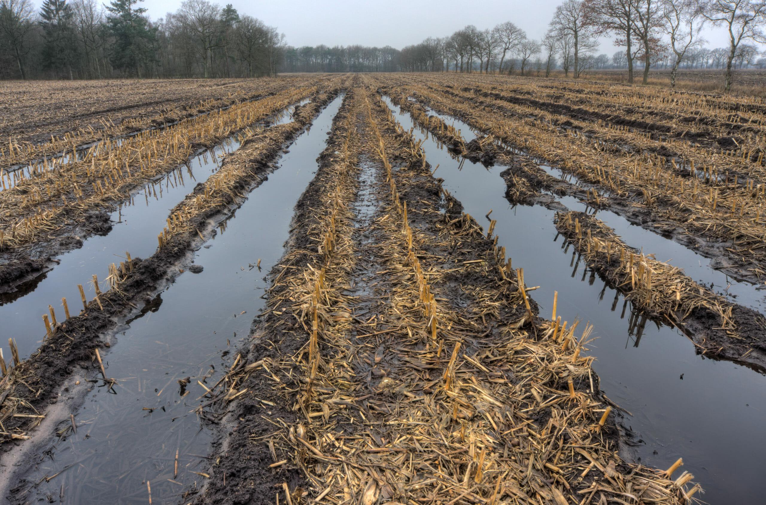 Wet harvest, flooded field, tips for wet harvest season, farming tips, agricultural tips, farming blog, ag blog