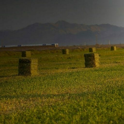 Square Hay Bales in a field